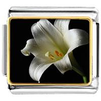 Italian Charms - white lily italian charms bracelet link photo italian charm Image.